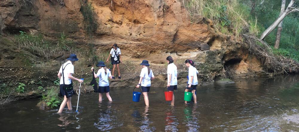 Creek Revegetation